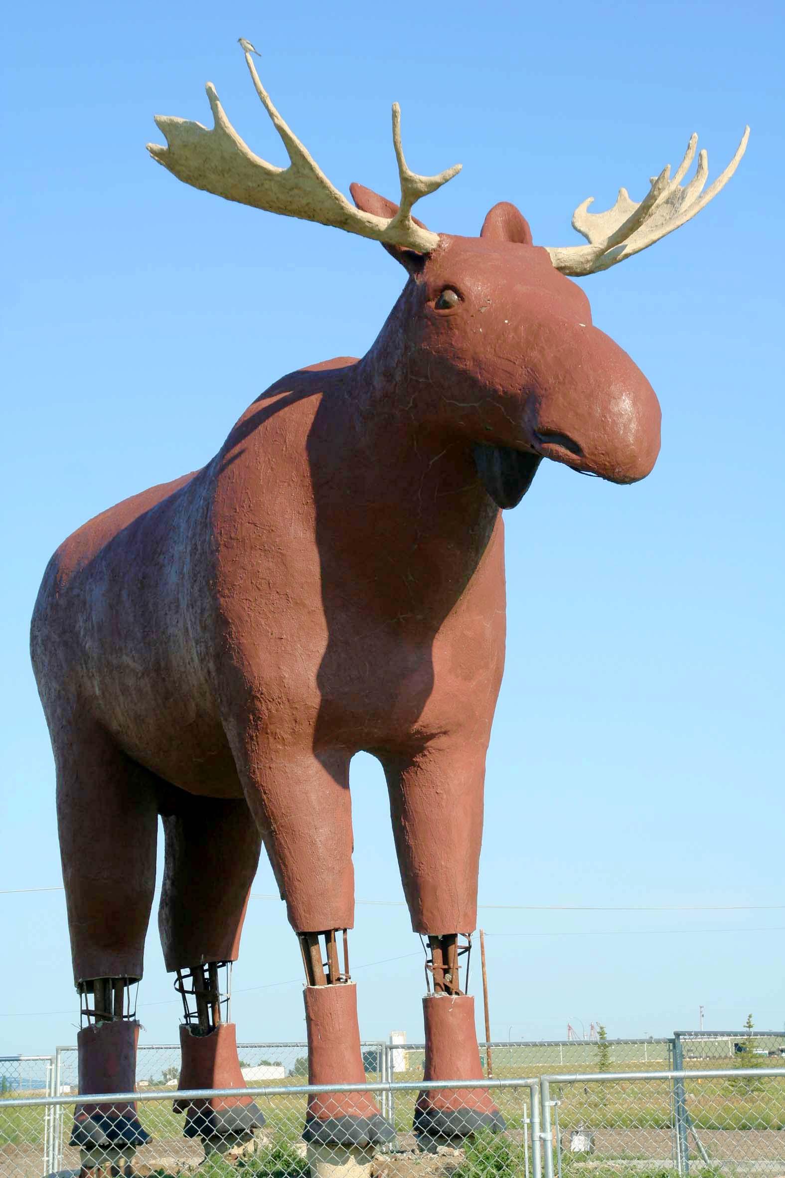 manitoba moose wilderness jersey